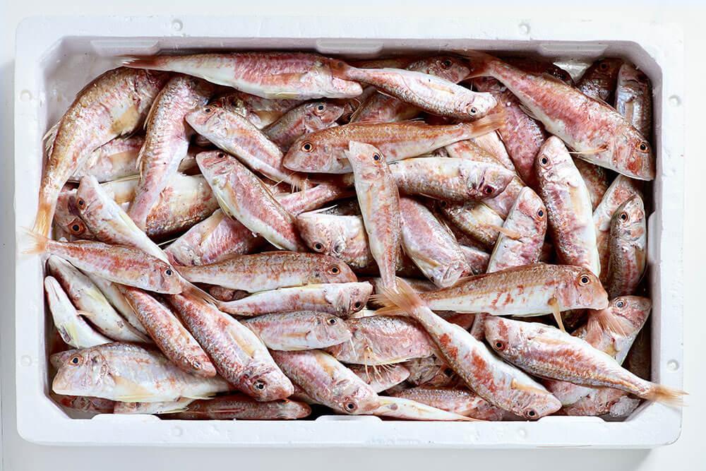 mavi pesca pesce in pacco
