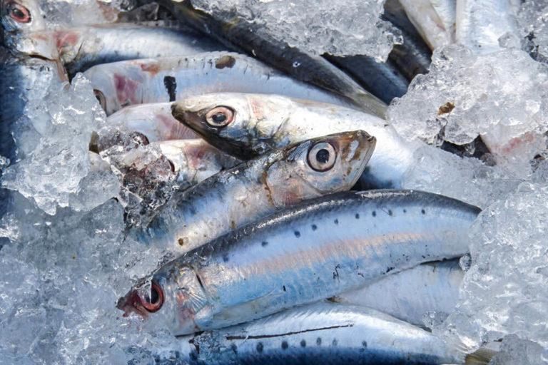 pesce azzurro come riconoscerlo
