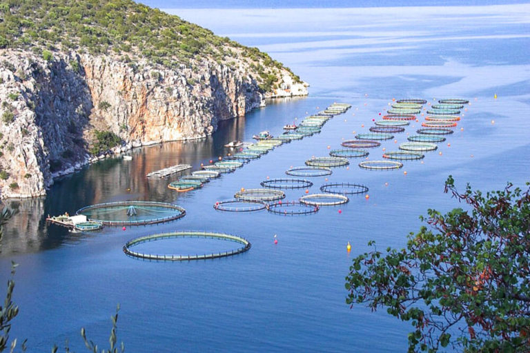 allevamento pesci in mare
